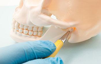 Sowing Temporomandibular Joint (TMJ)